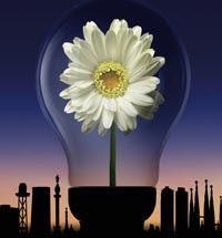 bobilla flor congeneracion